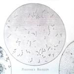 pfeiffers-bacilus-1918