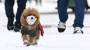 Pet Dog Wears Face Mask In Changchun
