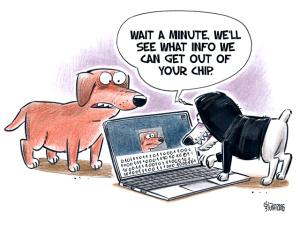 dog-chip