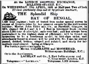 bengal-for-sale-1898